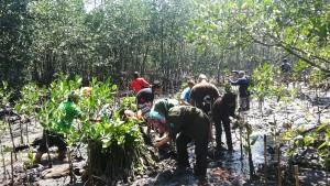 Tim Reksadana, Trashi dan KBR Menanam Mangrove di Pulau rambut . (foto : KBR)