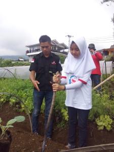 Belajar berkebun organik